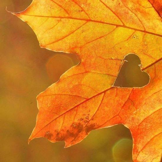 Oktober Herbstwochen  7=6