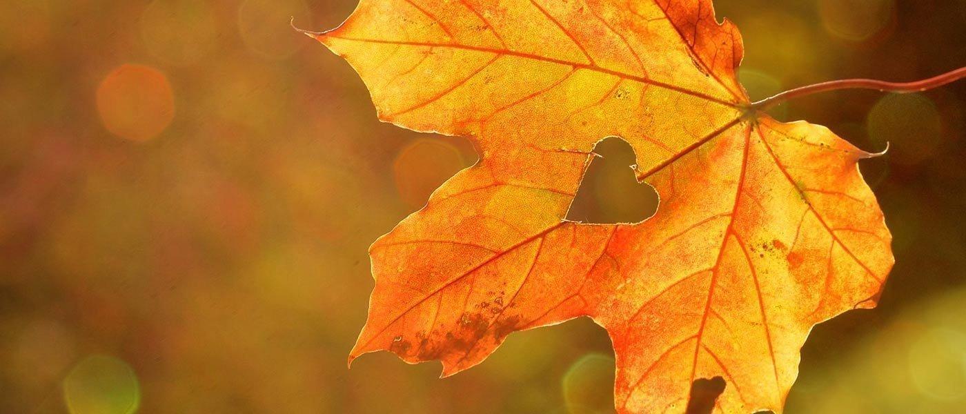 7=6 Herbst